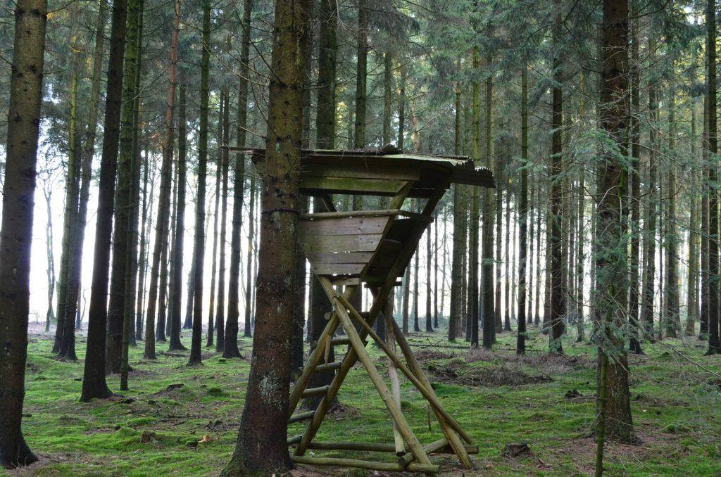 Ansitzleiter an Baum im Bestand befestigt