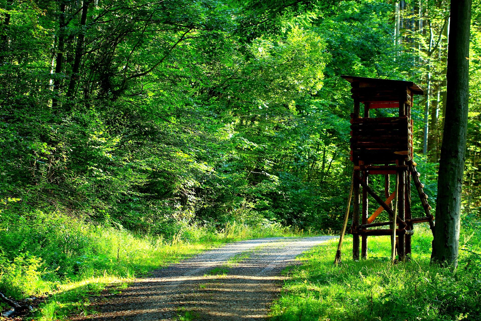 Offene Kanzel auf einem Waldweg mit gutem Schussfeld