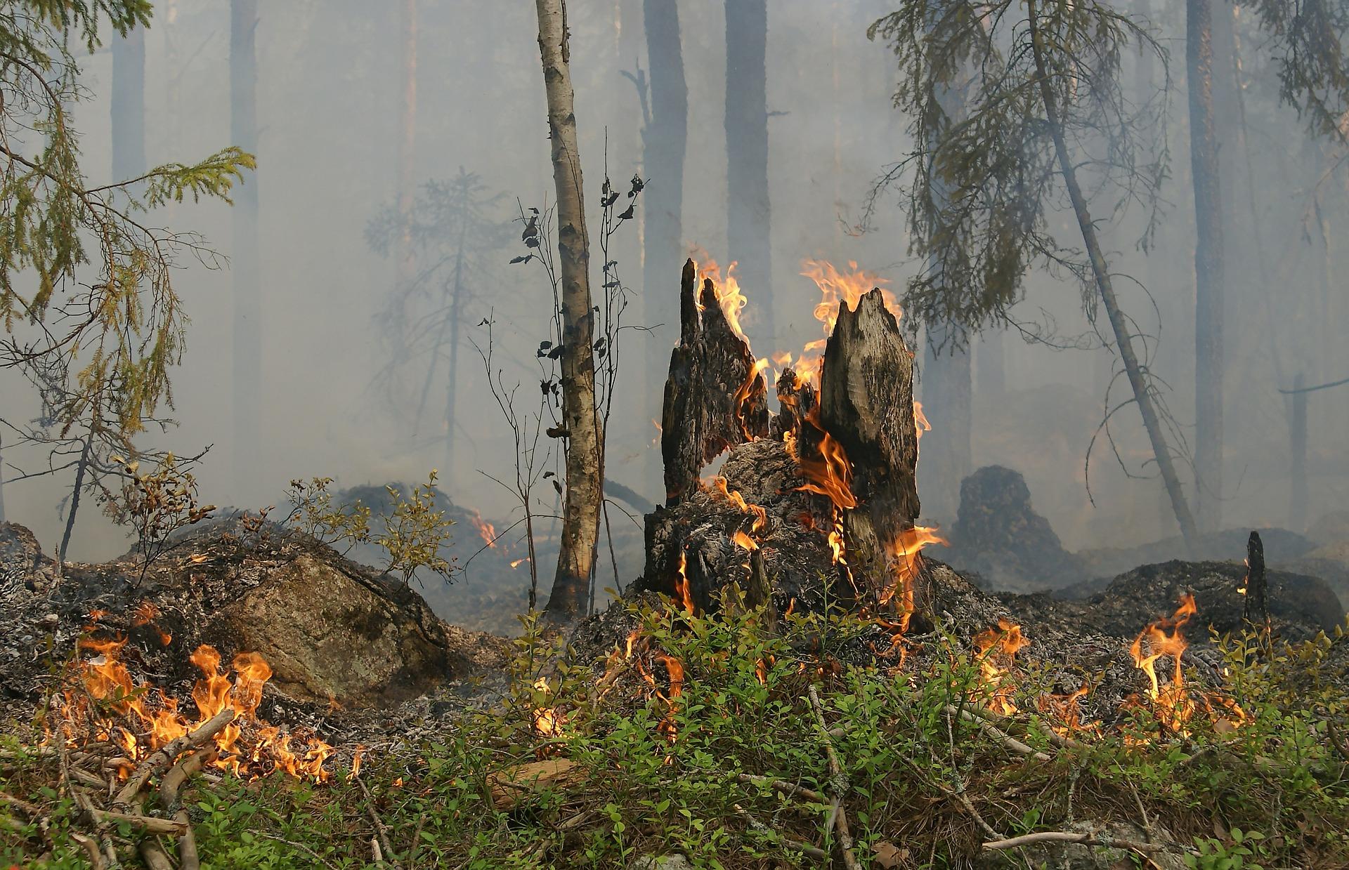 Waldbrandgefahr - wegen des trockenen Sommers auch 2019 sehr hoch